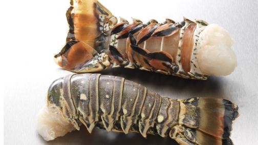 MSC White Lobster Tails
